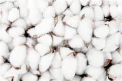 2021棉花价格最新行情:现在多少钱一斤?价格会上涨吗?
