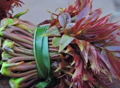 香椿繁殖方法有哪些,香椿怎么种植好