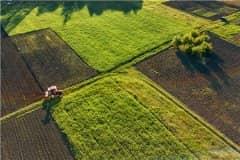 2021年小麦种植的最佳时间:最晚什么时候播种?附各地小麦播种时间