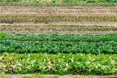 农村种植哪些能赚钱?农村种植什么前景好?