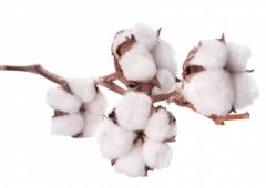 山东省棉花中后期怎么管理,棉花怎么施肥