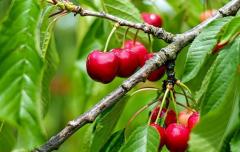 春天适合种什么水果,什么水果产值高