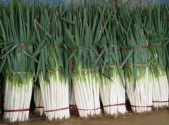 春播大葱栽培技术,大葱种植方法总结