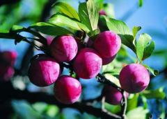 果树简易修剪法,有哪些方法适合修剪果树