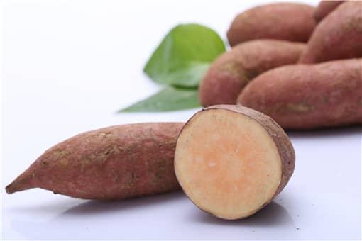 红薯几月挖最好