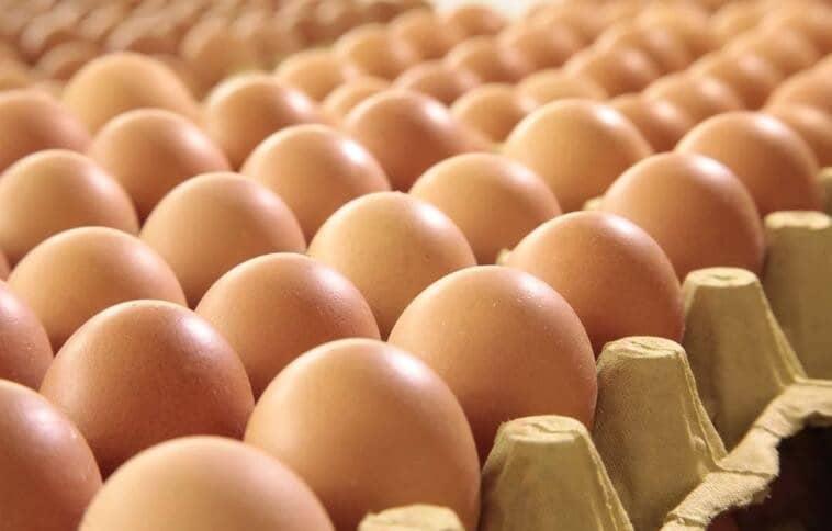 鸡蛋壳属于什么垃圾