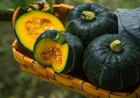 板栗南瓜栽培管理技术 南瓜应该怎么养殖