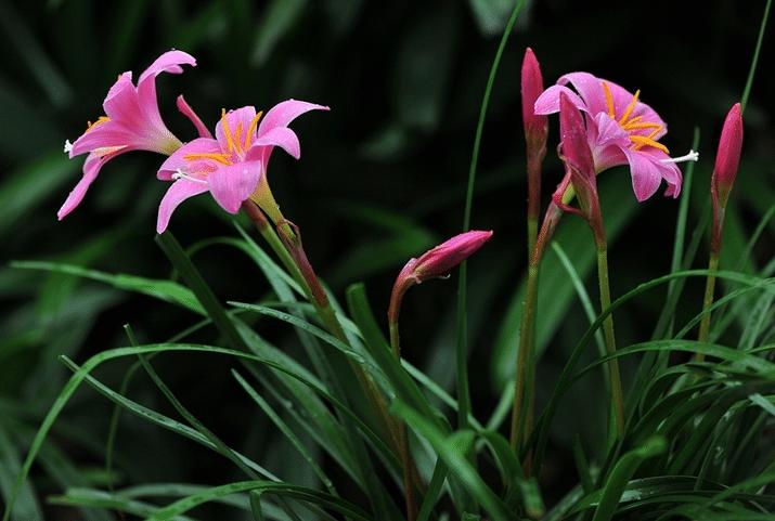 夏天栽兰花能活吗 如何移栽提高成活率