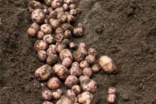 种植土豆补贴有哪些