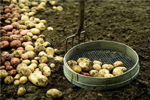 马铃薯生产者补贴