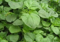 为什么早春蔬菜长得不好,优质蔬菜的施肥方法是什么
