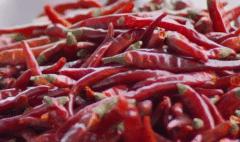 辣椒疫病和枯萎病有什么区别,如何进行防治