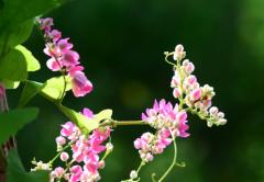 中秋节送什么花,哪些花适合做中秋礼物