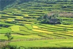 四川耕地地力保护补贴标准:每亩补贴多少钱?附领取方法!