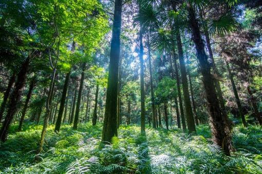 乡村护林员的职责