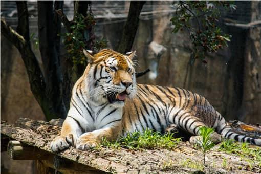 东北虎豹国家公园正式成立